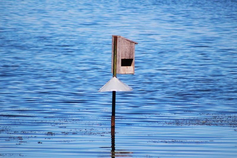 Birdfeeder Lake Blue Ripples Ripples In The Water Rippled Water Water Wooden Post No People Wood - Material Outdoors Day Wave Blue Water Tranquility Man Made Object Canon Eos Rebel SL1