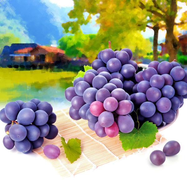 健康食物 台灣水果 室內 新鮮 果實 水果 油畫 特寫 美味 背景图 葡萄 農作物 食物