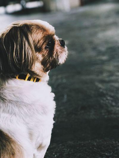 Feeling of the dog Thailandfollowme EyeEm Selects One Animal Animal Themes Mammal Animal Canine Dog Day