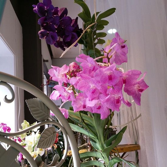 Exótico no, lo siguiente. orquidea Vanda aérea, dale un toque de Exotismo a tu mundo. Alea Orquídea Flores Flowers Stunning