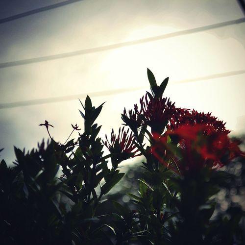Flores Garden Red Nature Natureza Green Nikon Brasil Gotic