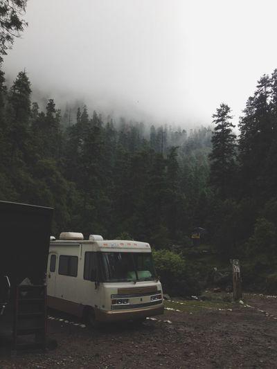 Forest Forest Photography Green Camper Camper Van
