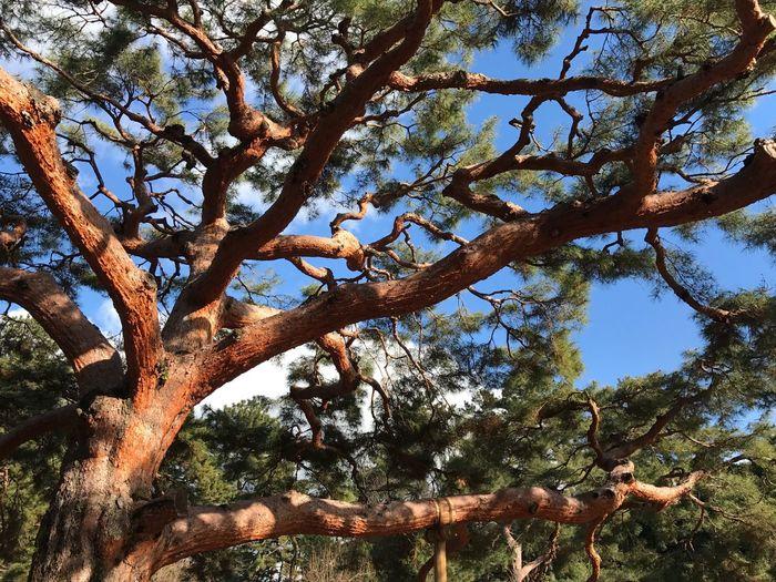 Power🌳 Tree