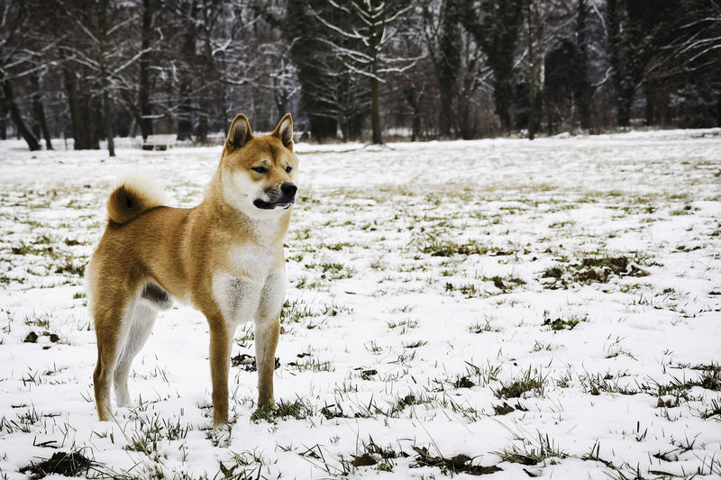 Dog on field in forest during winter