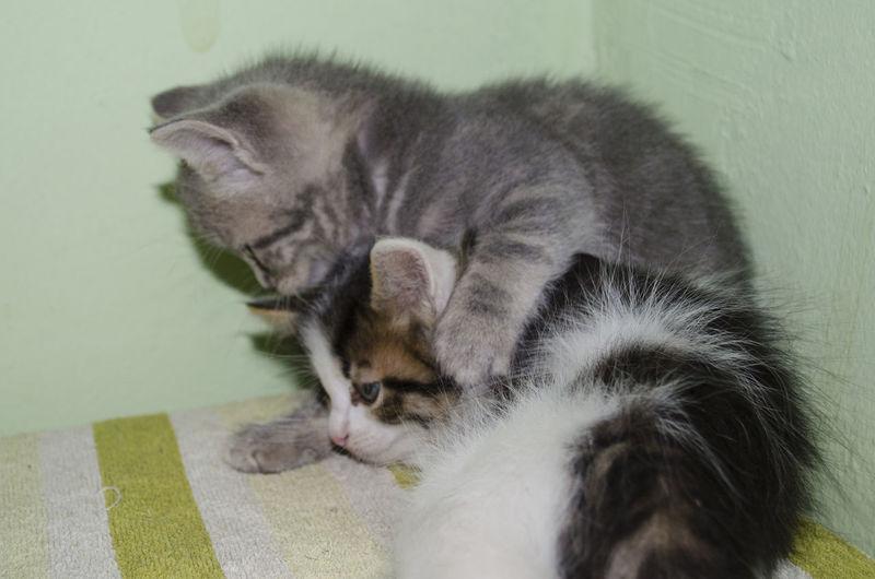 Play Cats Kitty
