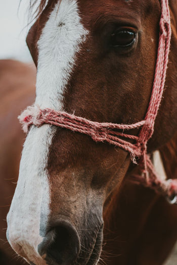 Close-up of horse in ranch