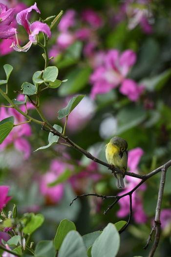 Bird perching on pink flowering plant