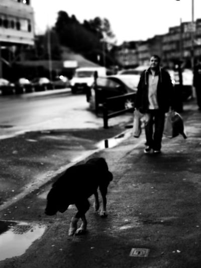 Dog walking on footpath in city