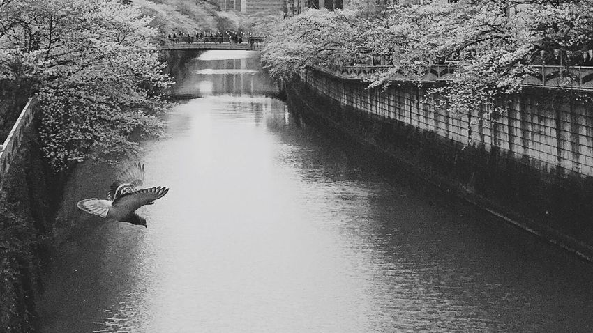 Monochrome Blackandwhite Black And White Shootermag_japan Shootermag Relaxing Enjoying Life Streetphotography B&w Street Photography Streetphoto_bw Moments From My Point Of View