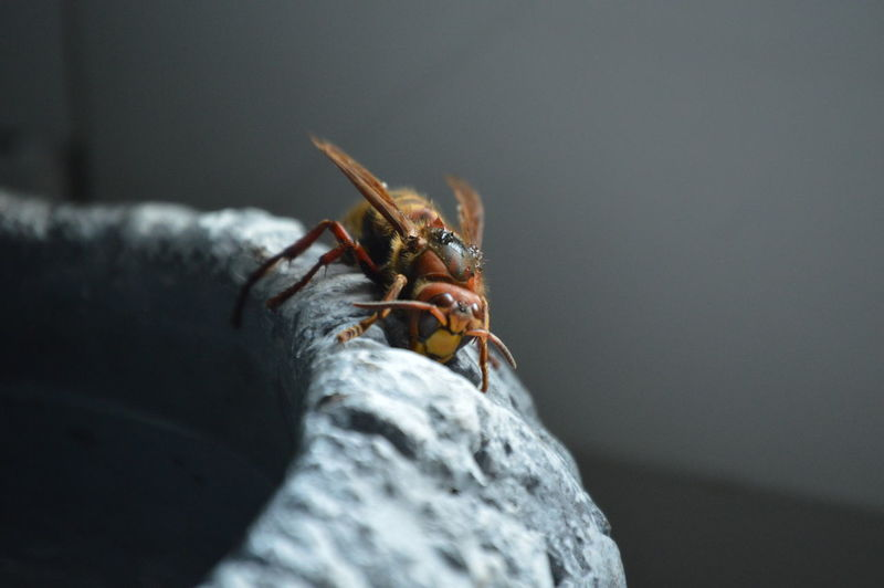 Hornet which came inside