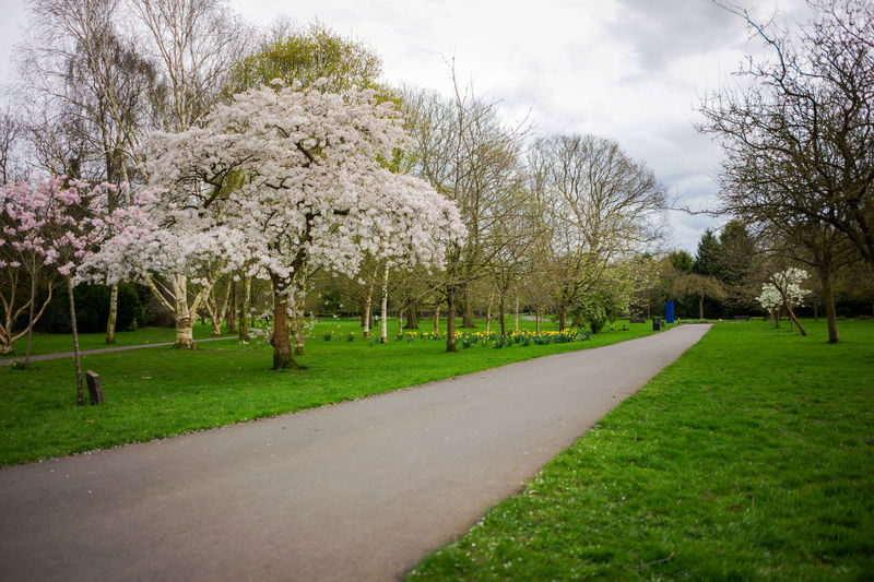 Park in springtime rural scene lush foliage, UK. Blossoms  Bushes Countryside Day Daytime England Foliage Grass Green Lush Lush Foliage Landscape Tranquil Scene Tree Beauty In Nature Green Color Nature Outdoors Green Pine Tree Forest Hilltop Hills Landscape_photography Nature No People Outdoors Outdoors Photograpghy  Outside Park Pathways Petals🌸 Plants Rural Scene Spring Springtime Tree Trees