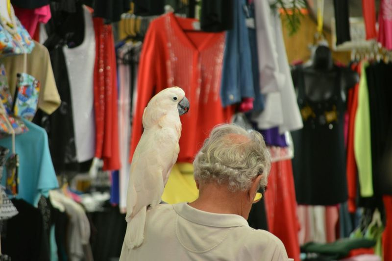 Selective Focus Fleamarket Parrot Bird Photography Bird Watching Florida Life Florida United States One Person Animal Themes Clothing Shopping Center Relaxing Hanging Out Enjoying Life Tropical Paradise Animal Side View Indoors  The Purist (no Edit, No Filter) No Edit/no Filter Fort Myers The Street Photographer - 2016 EyeEm Awards Live Love Shop