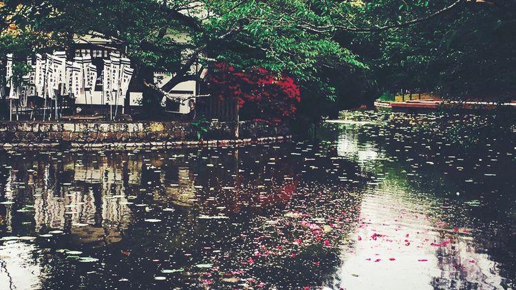 つつじの花筏 No Standard World From My Point Of View Streetphotography Azalea Pond Reflections Reflection IPhoneography Old School EyeEM Nature 5月3日の鎌倉八幡宮にて Be. Ready.