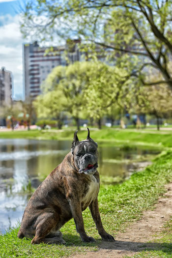 Portrait of dog by tree in park