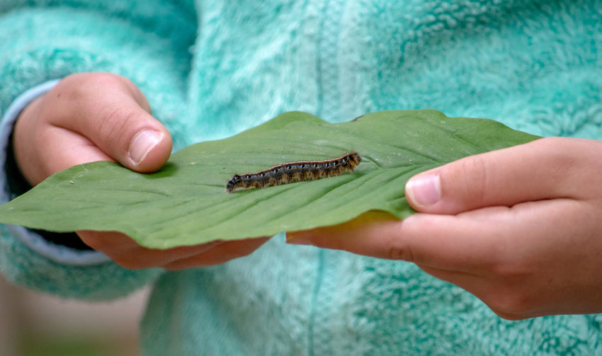 Cropped image of person holding caterpillar on a leaf