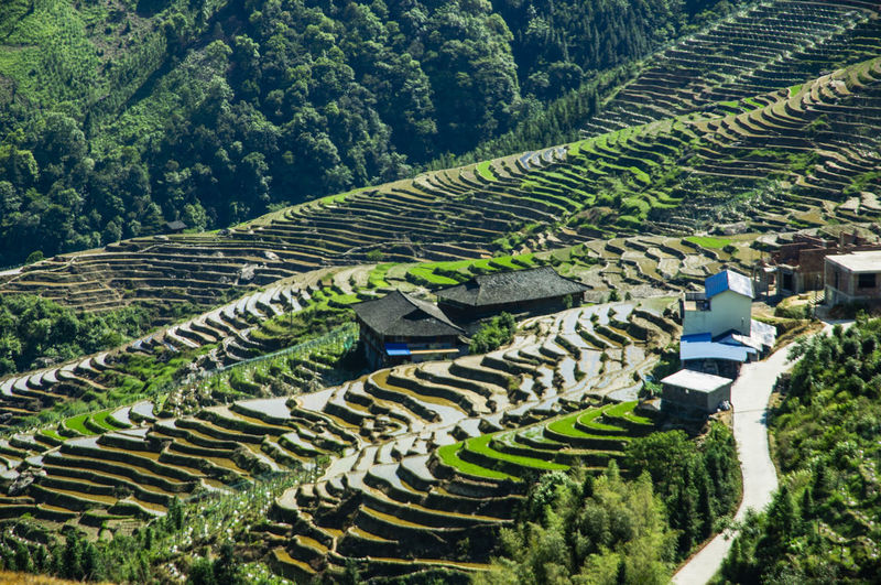 Terraced field