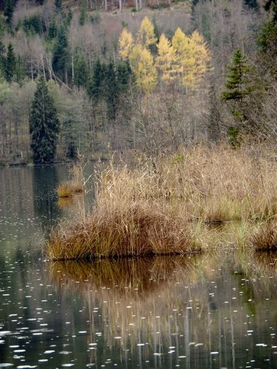 Beauty In Nature Let It Rain Autumn🍁🍁🍁 Reflections In The Water In Bayern Germany