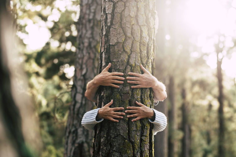 Person holding tree trunk in forest