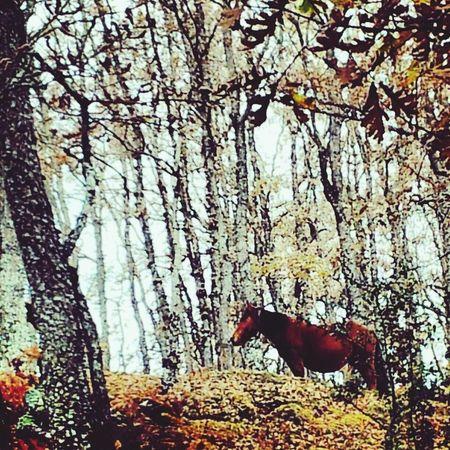Animals Horse Eye Em Nature Lover Nature