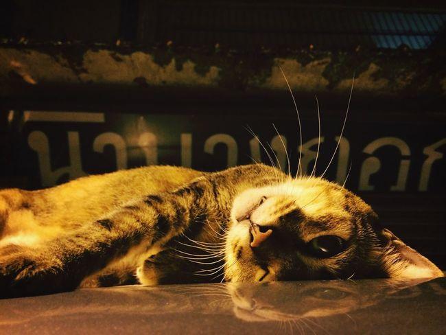 hi Cat Adorable Kitten Cute