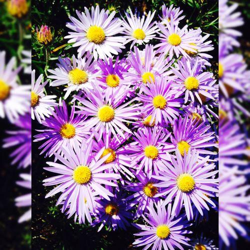 Flowers. 🌸🌺