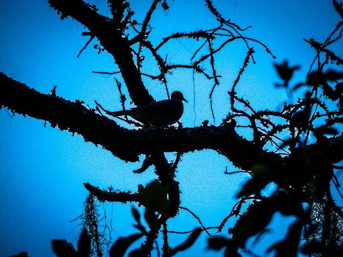 Sillouette Dove Love Dove Bird Photography Showcase June