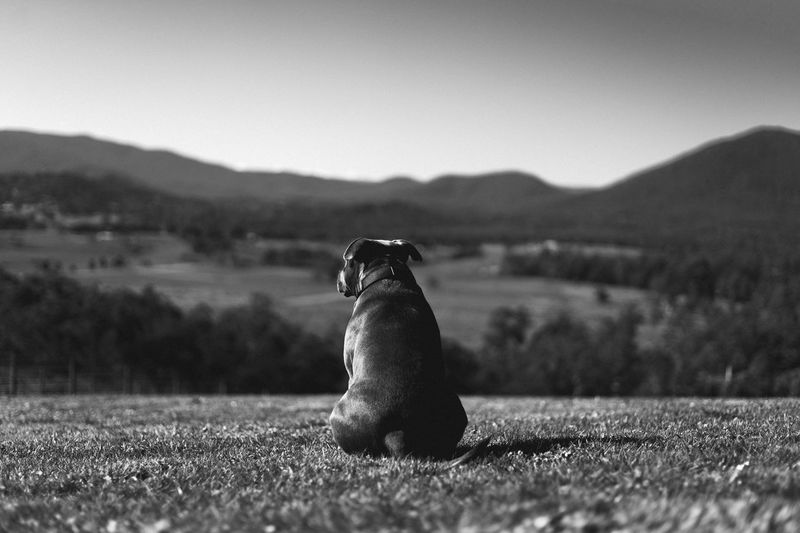One Animal Animal Themes Day Mountain Field Outdoors Mammal No People Nature Animals In The Wild Domestic Animals Sky Grass The Week On EyeEm Pet Portraits