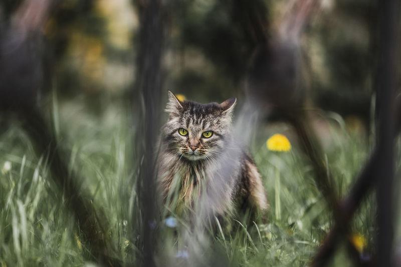 Portrait of cat by plants outdoors