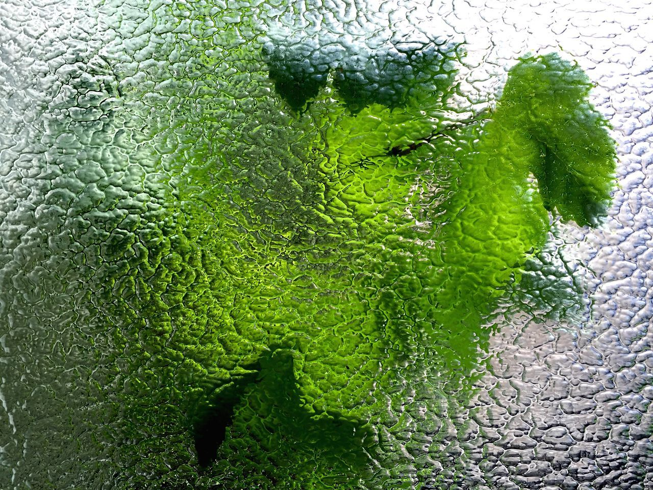 Green Leaves Seen Through Glass Window