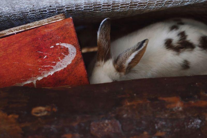 Bunny  Red Animal Themes One Animal Animal Animal Themes Rabbit - Animal Mammal Pets No People Close-up Domestic Domestic Animals Indoors  Animal Body Part Animal Wildlife Brown Relaxation Nature The Still Life Photographer - 2018 EyeEm Awards The Creative - 2018 EyeEm Awards Autumn Mood