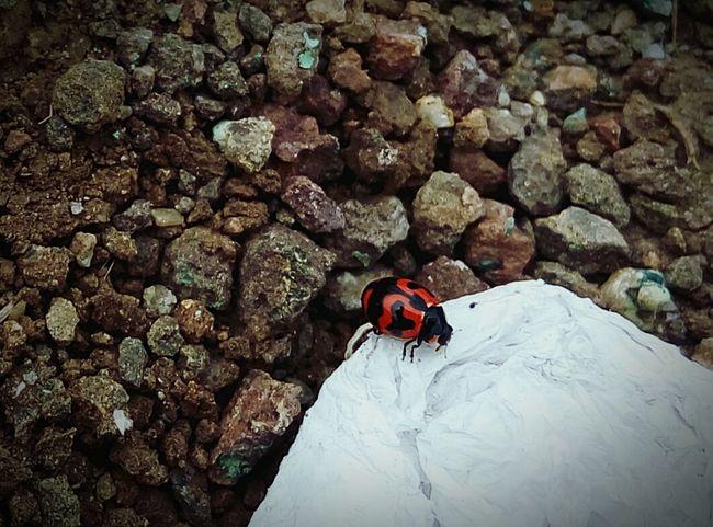 Redbug Macroclique 🐞 EyeEm Best Shots