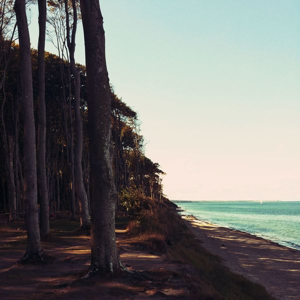 Copy Space Clear Sky Sea Tree Trunk Scenics Water Tranquil Scene Tranquility Beauty In Nature Nature Growth Non-urban Scene Outdoors Day Remote Shore No People Solitude Cliff