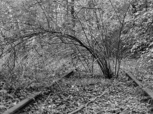 Abandoned Railway Berlin Blackandwhite Photography Street Photography Streetphoto_bw Blackandwhitephotography Blackandwhite Taking Photos Abandoned Places