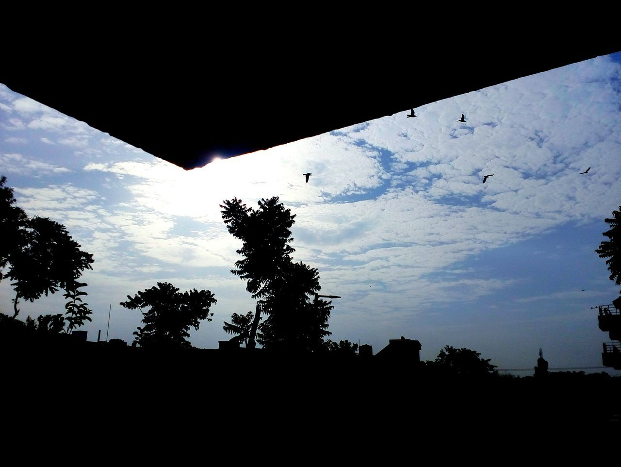 silhouette, tree, nature, sky, low angle view, beauty in nature, no people, cloud - sky, outdoors, tranquility, scenics, day, bird