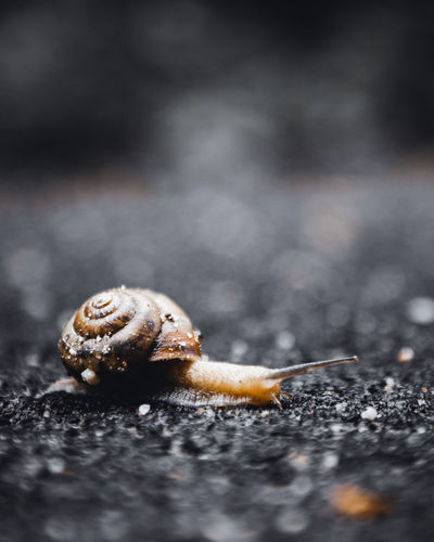 Motorhome Selective Focus Close-up No People Animal Wildlife Day Gastropod Animal Themes Mollusk Invertebrate Animal Animals In The Wild Nature One Animal Snail Outdoors Solid Land Shell Beauty In Nature Brown Surface Level Small Speed Slow Time Focus On Foreground Nikon D7500 Concept Focus Sharp