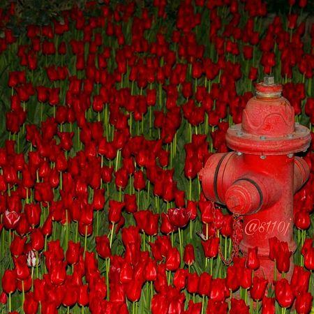 ۷مهر روز آتشنشان آتش نشان No People Outdoors Photooftheday Photographylovers Social Issues Tehran S110j Canonphotography Canon Eos Kiss X7 Fireman Firefighter Man Firefighter Equipment
