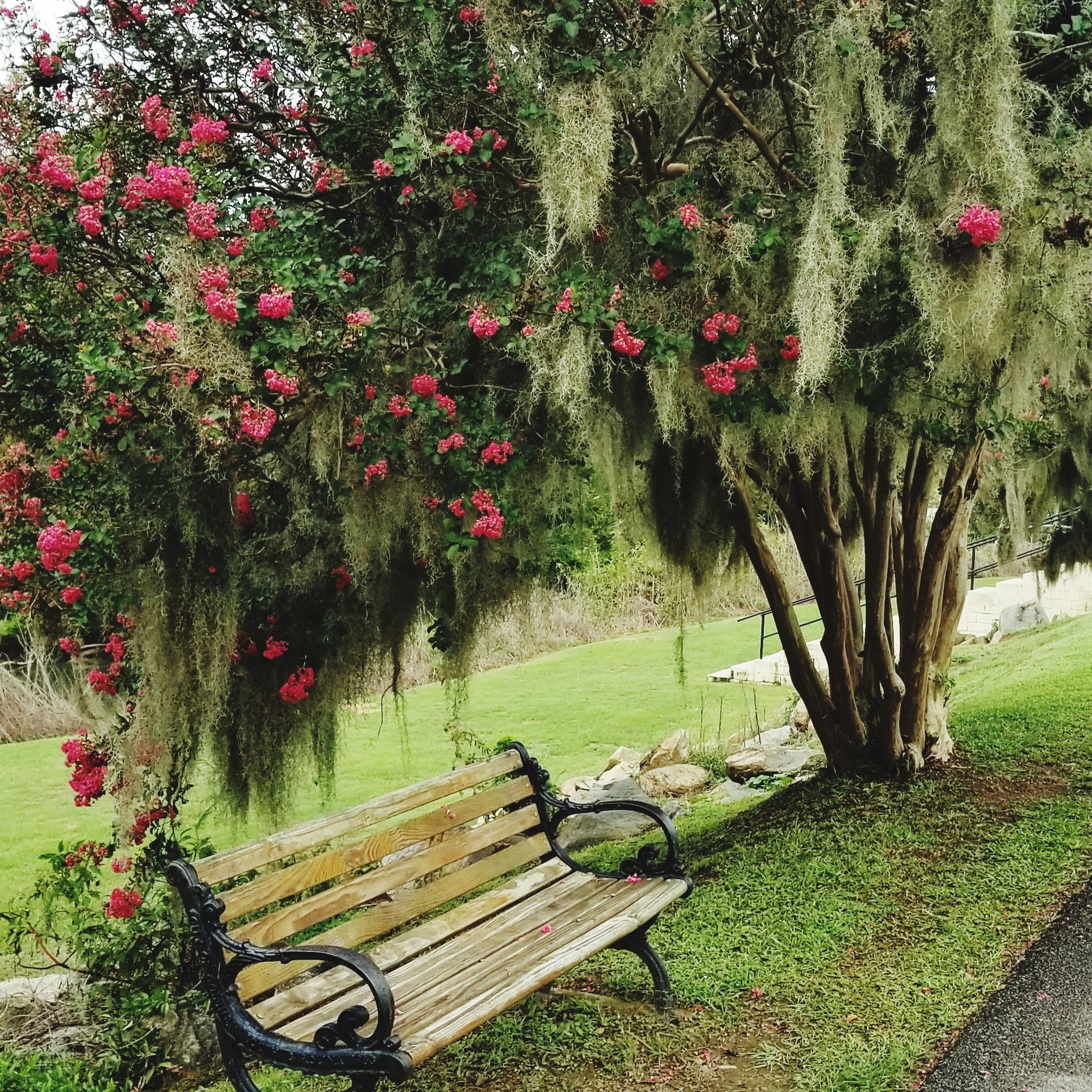 plant, flower, flowering plant, nature, park, growth, beauty in nature, grass, bench, tree, no people, park - man made space, seat, garden, green color, outdoors, day, red, wood - material, relaxation, park bench