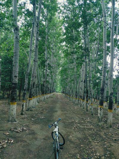 Tree Forest Men