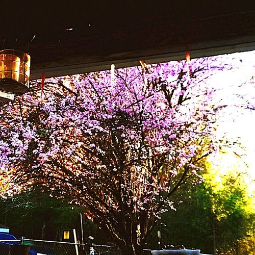 I love my flowering Japanese plum trees. They are so pretty and they smell so good. PNW At Its Finest TreePorn PrettyInPink Japanese Plum Blossom The Week On EyeEm