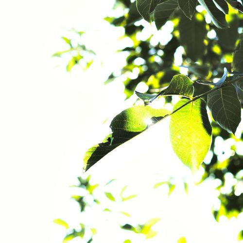Aerial Emerald