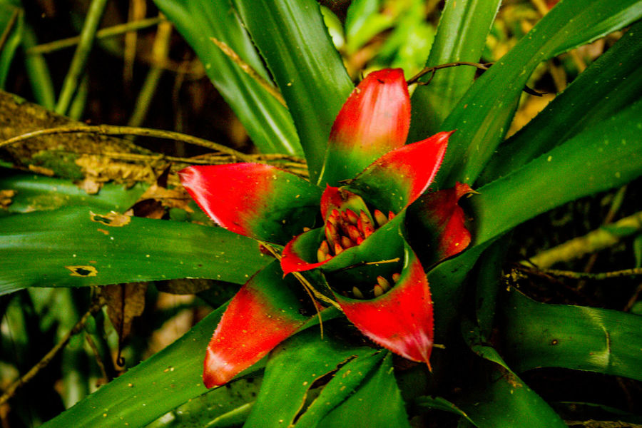 Ecoturismo Meleiro, Brazil Beauty In Nature Close-up Day Ecoturism Flower Flower Head Freshness Green Color Growth Leaf Nature No People Outdoors Plant Red