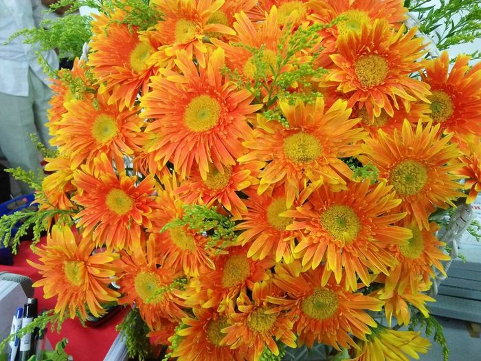 orange gerbera Gerbera Orange Gerbera Flower Head Flower Flower Market Retail  Close-up Plant Blooming In Bloom Blossom