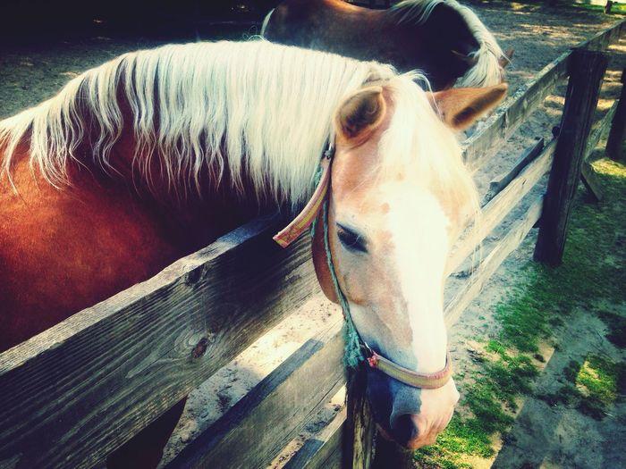 Animals Horses Zoo Zoo Palic Break Time Palić Summertime Great Times Showcase June