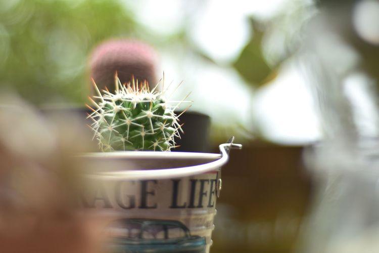 Close-up Plant