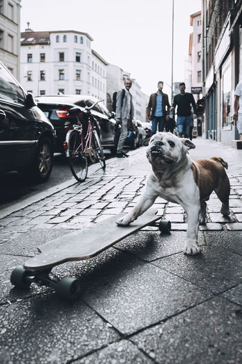 Bulldog Longboard Animal Animal Themes Architecture Building Exterior Built Structure Canine Car City Dog Domestic Domestic Animals Land Vehicle Mammal Mode Of Transportation Motor Vehicle One Animal Pets Photography Sport Street Streetphotography Transportation Vertebrate