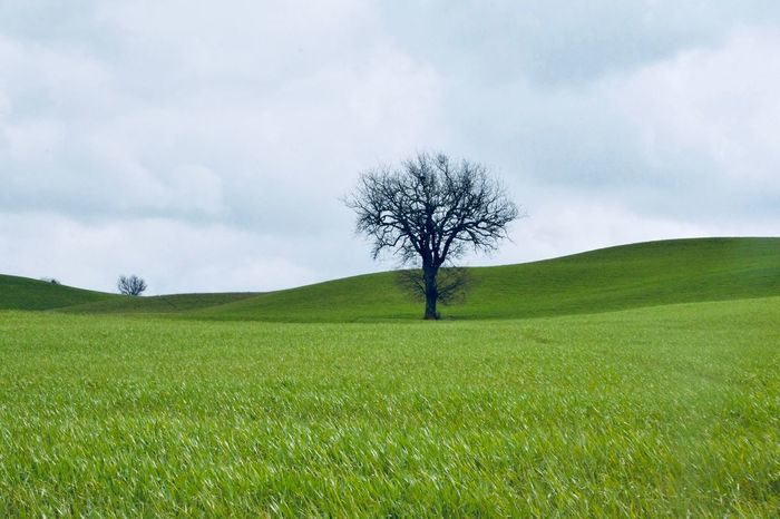 Plant Tree Sky Field Tranquil Scene Beauty In Nature Environment