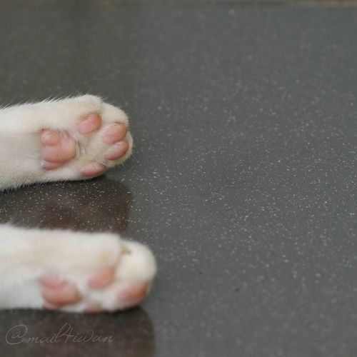 Pets Cat Paws Pink Pure And Untouched (raw Image) Lumix