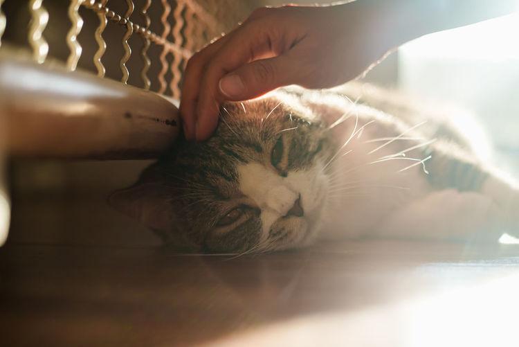 Cat sleeping on hand