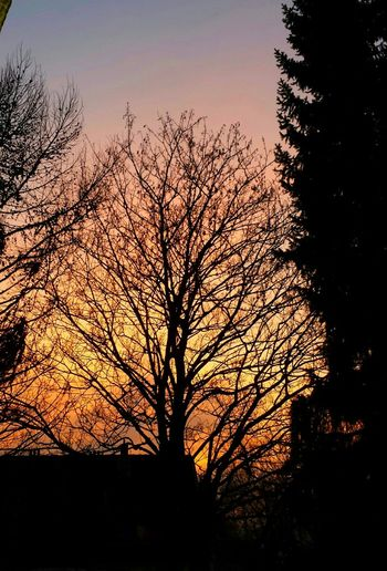 🌄 Sunset Sunset_collection Sunset Silhouettes Burning Sky Silouette & Sky TreePorn Tree_collection  Tranquil Scene Skyporn Orange Sky Awesome_nature_shots Beautiful Sunset Follow4follow Followme EyeEm Best Shots - Sunsets + Sunrise Eye4photography  Eyem Best Shots EyeEm Best Shots - Nature EyeEm Best Shots - My Best Shot Eyem Best Shots Nature_collection Scenics Sunset_captures Tree Silhouette Sunset Bare Tree Sky Branch Nature