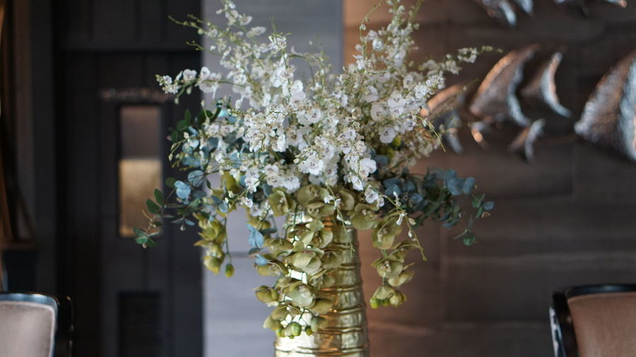 Close-up of white flowers in vase against wall